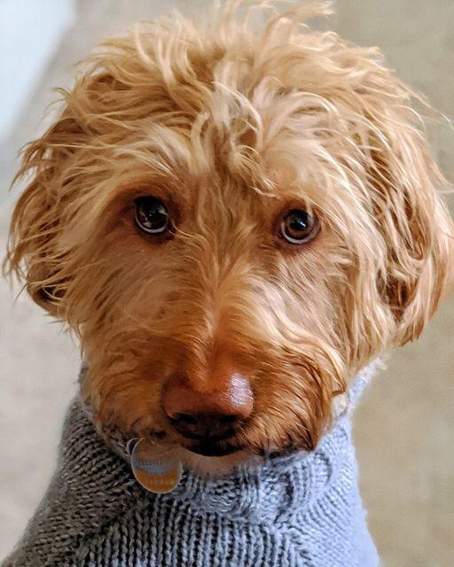 Clem1 (002) Laura Spehar's doggy