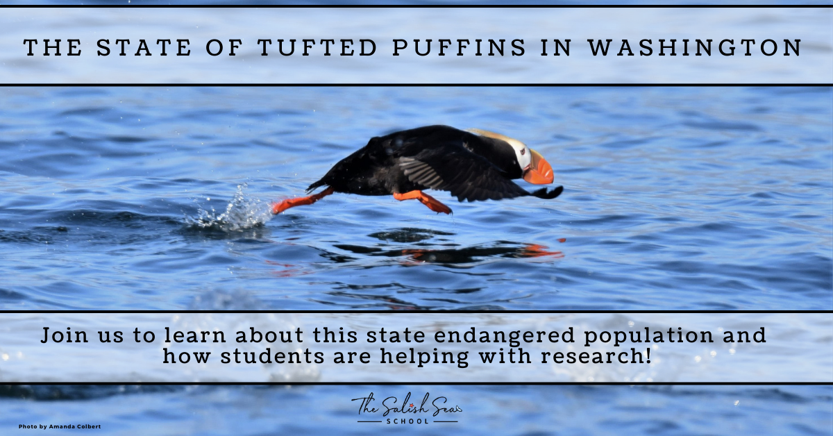 TUFTED PUFFINS WOW (6)