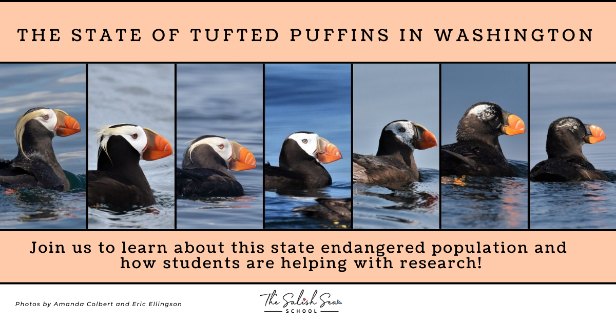 TUFTED PUFFINS WOW (7)